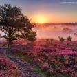 9 tips om de paarse heide te fotograferen
