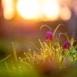 Macrofotografie inspiratie: dit fotografeer je in de tuin