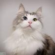 Tips en trucs bij het fotograferen van huisdieren