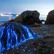 Bijzondere foto's van vuurvliegjes in zee