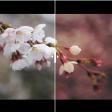 Sneak peek: de nieuwe updates van Adobe Photoshop en Lightroom