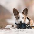 Tweedehands camera: let hierop
