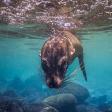 Tips voor spetterende onderwaterfoto's