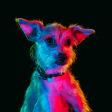 Kleurrijke portretten van asielhonden!