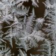Leuke macro-onderwerpen voor in de wintermaanden
