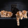 Collectie Schattige Kittens