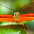 Onderwerpen voor macrofotografie: vlinders