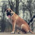 10 praktische tips voor huisdierenfotografie