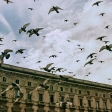 Redactiekeuze: The Birds