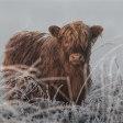 7 fotolocaties voor het fotograferen van Schotse hooglanders