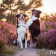 8 tips voor het fotograferen van honden