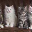 Aan de slag met kattenfotografie
