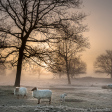 Uitslag fotowedstrijd Landschap