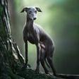 Scherpstellen bij dierenportretten: een paar tips