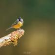 Collectie Kleurrijke Vogels