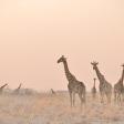 Tips voor fotograferen in Namibië