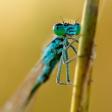 5 tips om libellen te fotograferen!