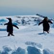 Fotodokter: Fotograferen op Antarctica