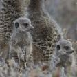Zes kleine dieren die je niet mag missen in Zuid-Afrika