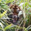 12 tips voor het fotograferen van wilde katachtigen