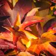 Bekijk de allermooiste foto's van bladeren