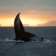 Vesteralen in Noord-Noorwegen: Walhalla voor wildlife fotografen