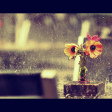 Redactiekeuze: Raindrops