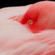 Wildlife fotografie in de dierentuin: 6 tips