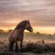 Wild fotograferen in Nederland - wilde paarden