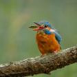 6 belangrijke tips voor het fotograferen van vogels