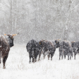 Tips: Natuur fotograferen in januari
