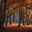 10 prachtige herfstbossen om te fotograferen