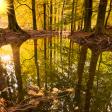 Vijf tips voor betere bosfoto's