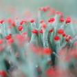 Tips: Natuur fotograferen in december