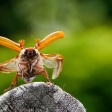 Wild fotograferen in Nederland - insecten in je tuin