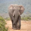 Gebruikersreview: Wildlife met de Sigma 60-600mm in Zuid-Afrika