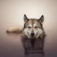 Dit is de winnaar van de Panasonic fotowedstrijd 'Dierenfotografie'!