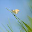 Tips: Natuur fotograferen in april