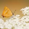 De beste tips voor lente-fotografie - Een overzicht