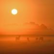 Magische mist: een paar tips om mist te fotograferen