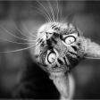 Vijf tips om huisdieren te fotograferen