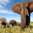 Doe mee met de Fotowedstrijd 'Met oog voor Afrika'