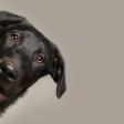 Huisdieren fotograferen: dit zijn de don'ts