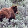 Wildlife fotograferen in Yellowstone