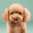 Vrolijke fotoserie van hondjes met een happy hairday