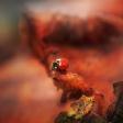 5 tips om de perfecte herfstkleuren in je foto naar boven te halen