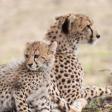 7 Tips voor wildlifefotografie