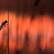 Tips: Natuur fotograferen in juli © Zoom.nl