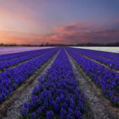 Alle tips die je nodig hebt voor landschapsfotografie - Een overzicht