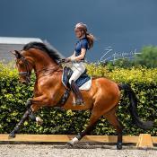 Fotografen gezocht! Meedoen aan een workshop paardenfotografie van Dominique van Dreumel? © IDG NL